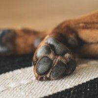 Dermatite del cane: Tipologie, cause e rimedi