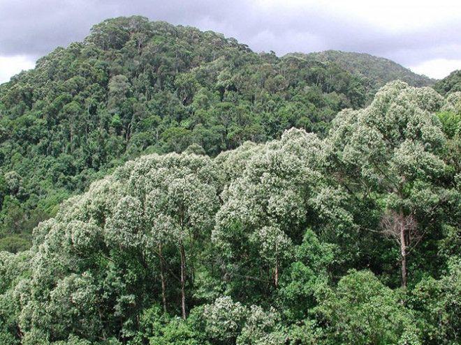 Огромнейшие леса на планете http://ift.tt/2ibX5U6