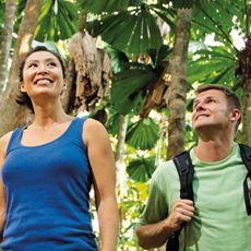 Things To Do in Cairns | Daintree Tropical Rainforest | Rydges Esplanade Cairns Resort