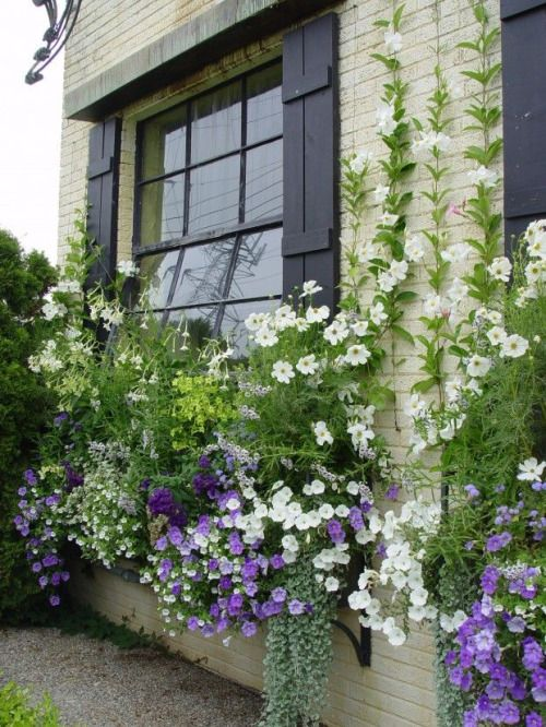 Lovely flower box in purples and white.