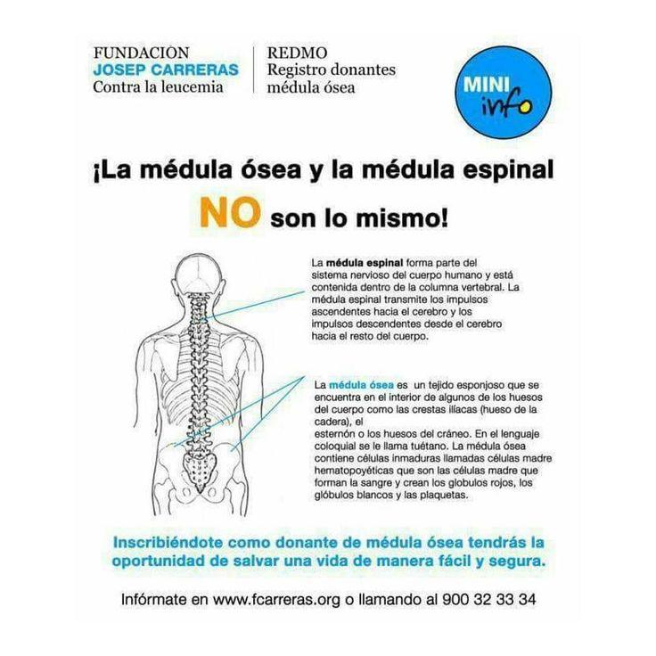 Ojo!   La médula ósea y la médula espinal NO son lo mismo.  #DonaMédula #DonaVida  Más informaron en  www.fcarreras.org