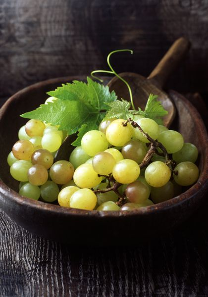 Grapes are one of the oldest cultivated fruits, fossils indicate that the cultivation and/or consumption of grapes goes back perhaps to the Neolithic era