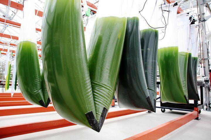 exxon + synthetic genomics plant https://gigaom.com/2010/07/14/photos-exxon-synthetic-genomics-open-algae-test-facility/
