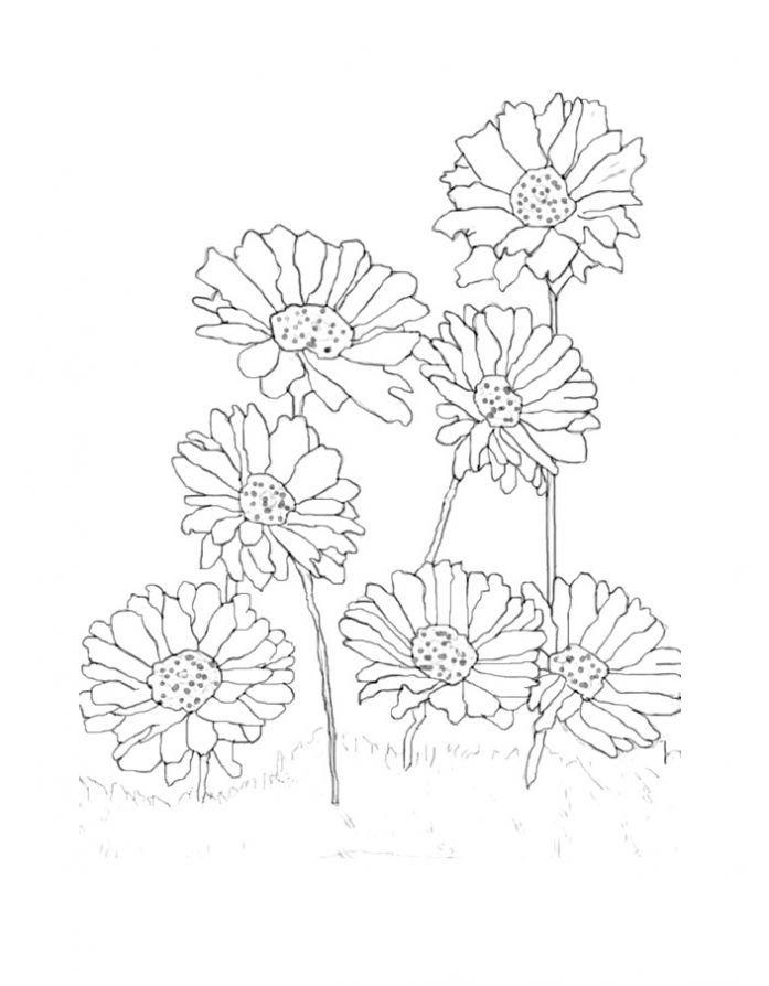 цветы герберы рисунки карандашом полигонов