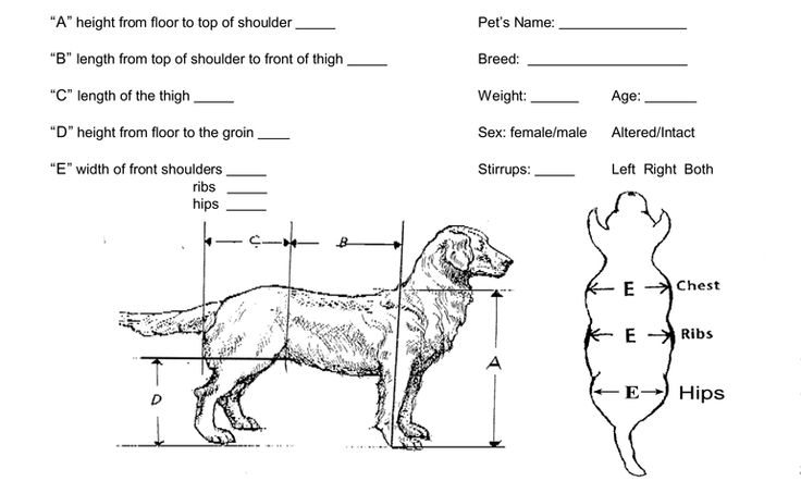 67 Best Caring For A Paralyzed Dog Images A