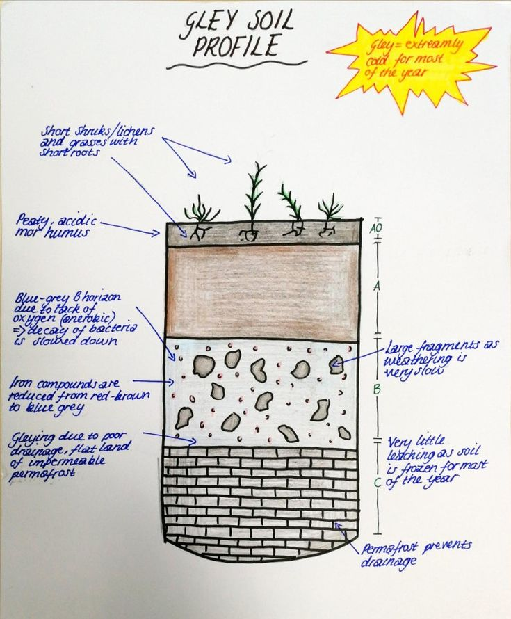 Gley Soil Profile Oxygen, Profile, Soil