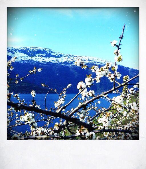 Vår i Hardanger