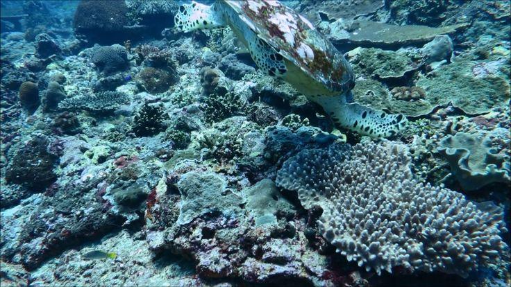 バリ、テペコンでダイビング/Gili tepekong Diving Bali