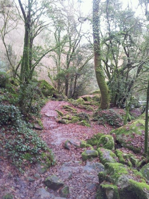 Bosques de Silleda (Fervenzas da Toxa, las cataratas más altas de Galicia)    Toxa's waterfalls forest (going to the waterfalls)..#galicia