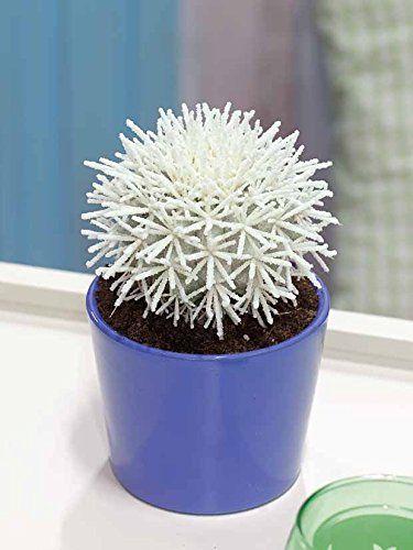 Cactus phosphorescent Willemse France https://www.amazon.fr/dp/B01ETSYQ3A/ref=cm_sw_r_pi_dp_x_yxFizb3G3D410