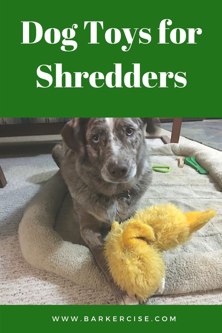 Dog Toys For Shredders Toys For Dogs That Like To Shred Smart