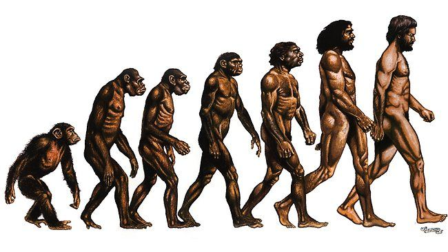 Evolution Of Man   ... of Evolution of Man from the ape. Picture: Supplied Source: Supplied