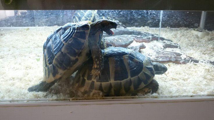 Moje želvy - leze na ně jaro