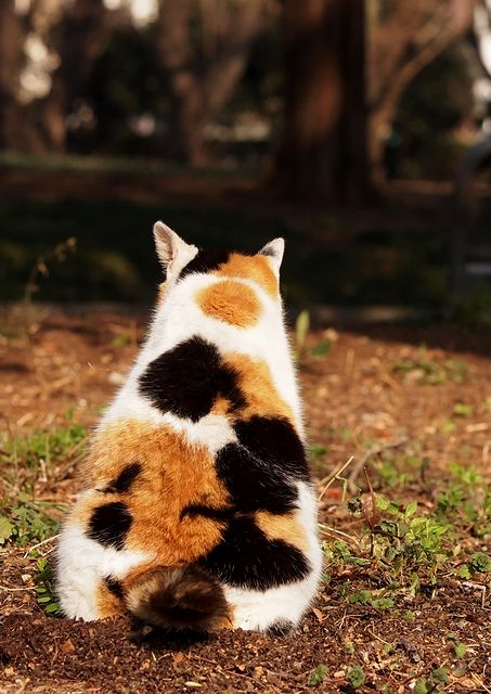 Give me a calico cat, pwease! (remember to wear ear plugs 'cause I'm gonna squealing hard)