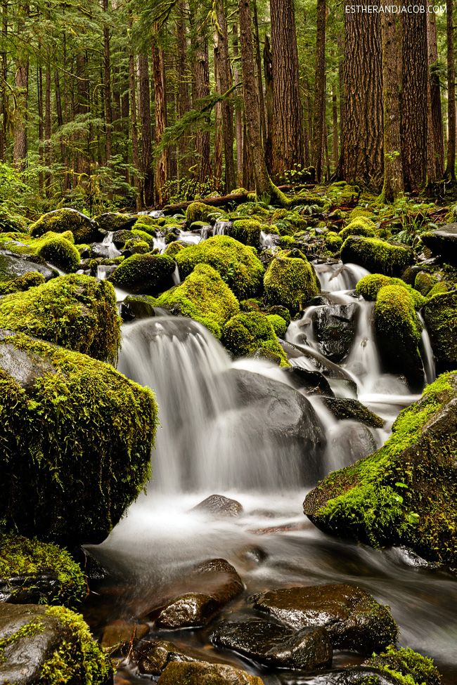Sol Duc Falls Trail in Olympic National Park WA