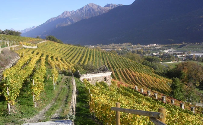 Valle d'Aosta - Grosjean's vineyards