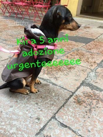 pincer-deliziosa-in-adozione