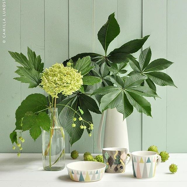 Buenos días!! @littlephant_team representado en España por Estilo Nordico It's definitely #teatime here at my end while absorbing the last #greenery before nature turns #autumn rusty red. Bringing in finds from the forest and garden is such a treat at this time of year where #magical #foliage can be found in every corner so go get some! /Camilla #Littlephan #Triangle #Saga #Porcelain #chestnut #hydrangea #hortensia #kastanj #castanilius #wildatheart www.Littlephant.com #Littlephant…