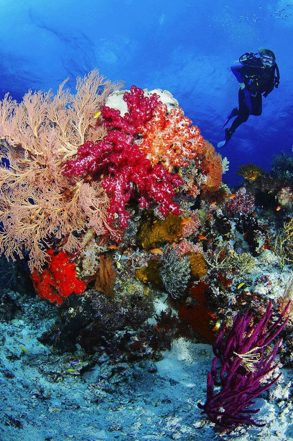 Diving and Snorkeling-Raja Ampat Islands: Explore The Underwater Paradise