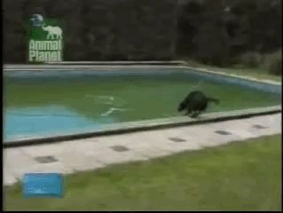 Well his dog really doesn't wanna get in the water lol