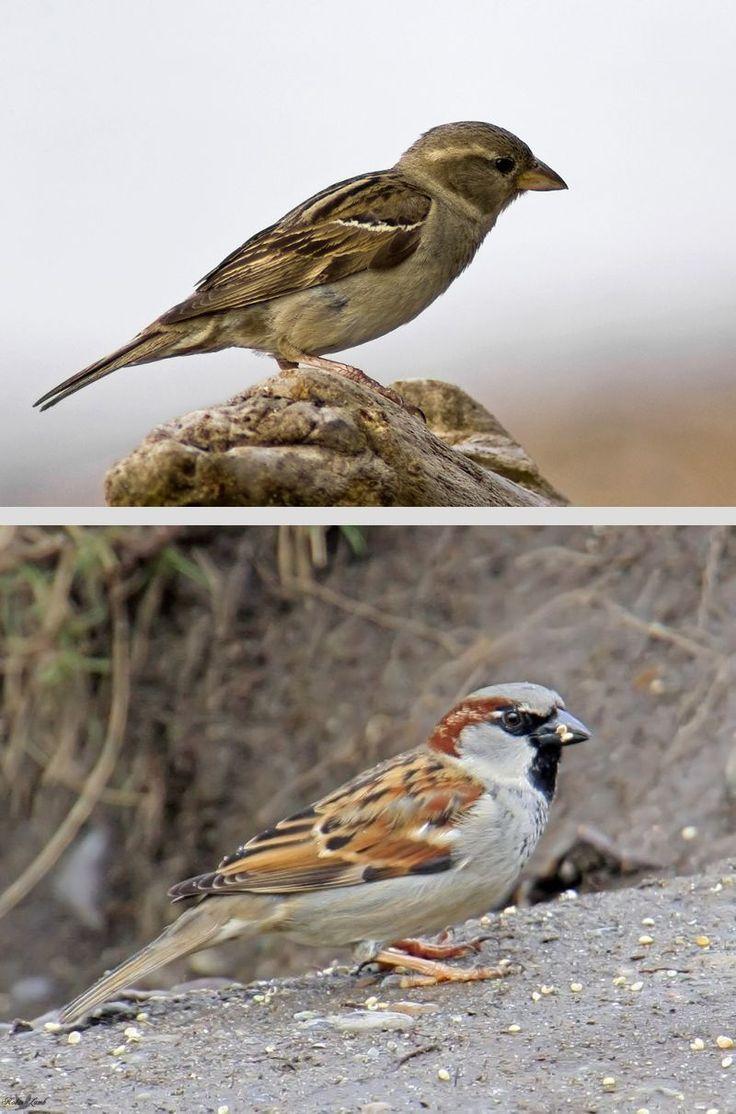 81 best birds of arkansas images on pinterest arkansas the