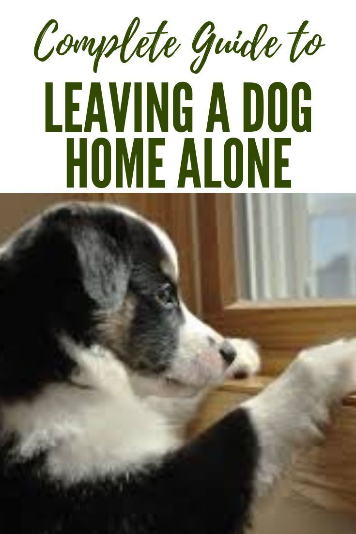 A Complete Guide To Leaving A Dog Home Alone Dog Training Bored