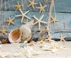 Обои Ракушки Морские звезды Крупным планом Песок