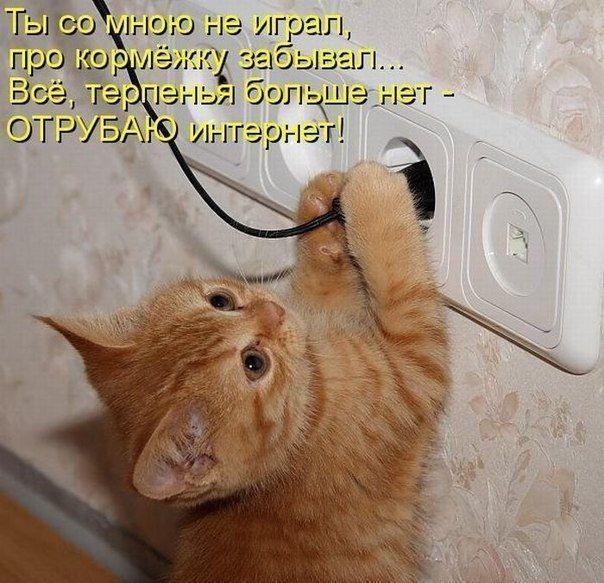 Смешные CAT... | ВКонтакте