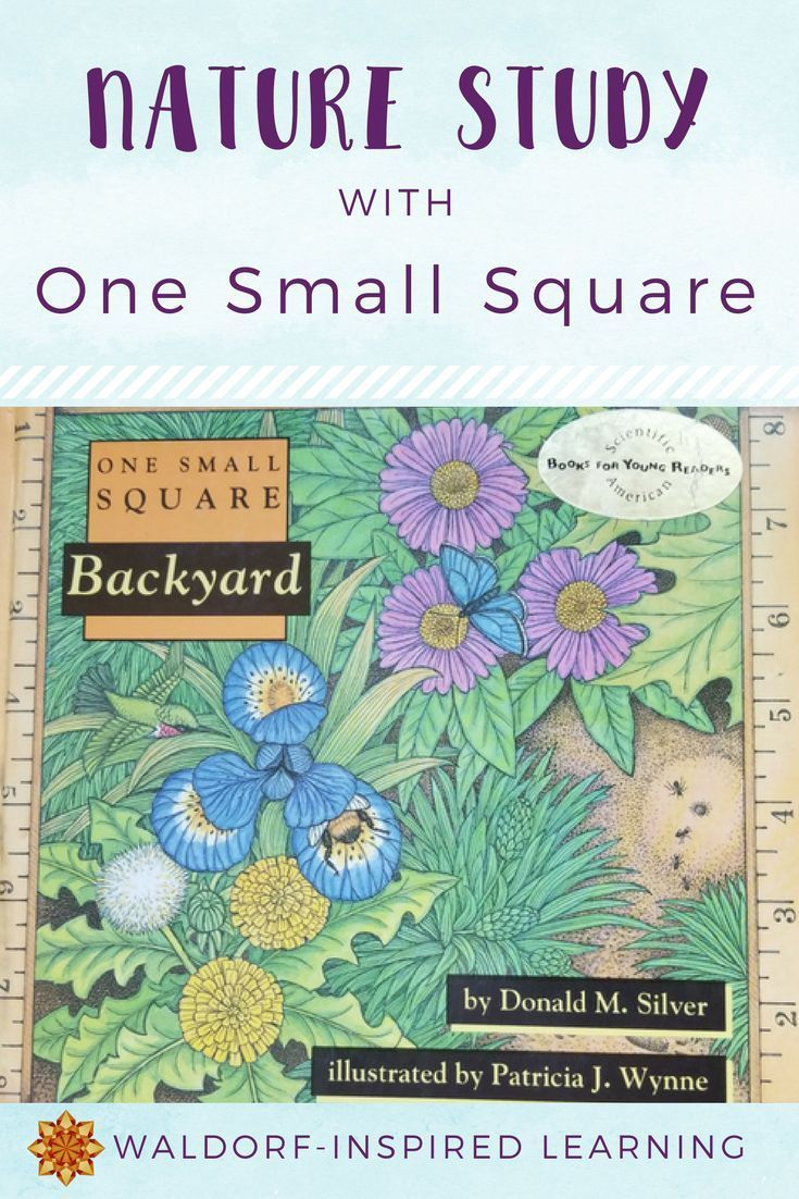 """Nature study with One Small Square: this book series would make a perfect multi-age block for the whole family in your Waldorf homeschooling. Great for a """"one week off"""" block, too, when you need to mix things up a bit. #waldorfhomeschooling #naturestudy"""