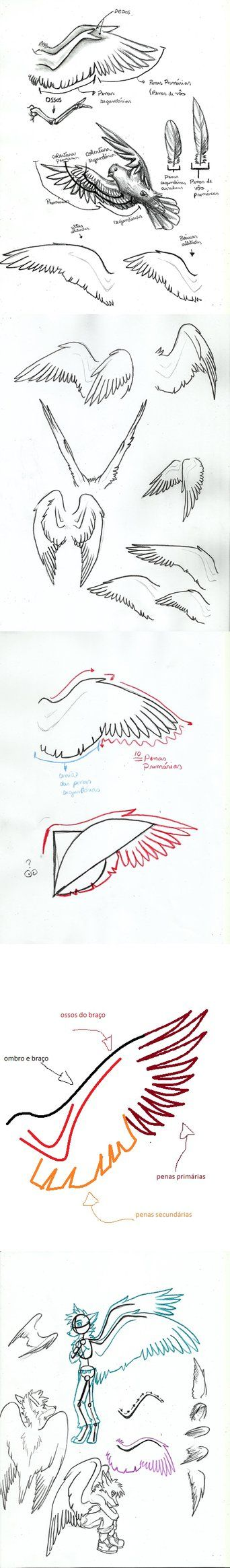 Hope this helps you gain a better understanding of wings.
