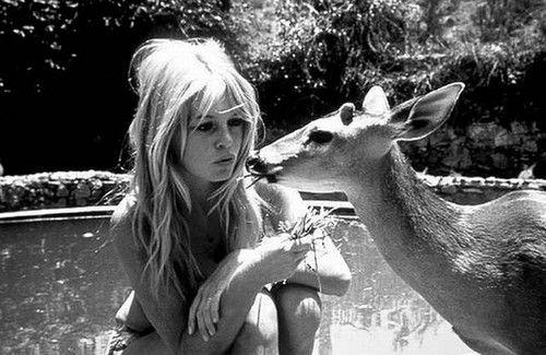 BISOU BICHETTE. Bambi kisses. Biche. Deer Hug. Calins d'animaux. Cute. Mignonnerie. Brigitte Bardot. Actrice française.