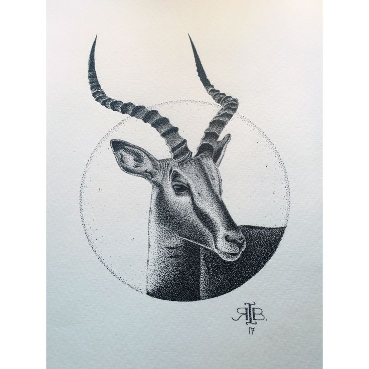 a n t e l o p e. #dots #stippling #pointillism #antelope #drawing #illustration #ink #blackink #rotring #pen #pencil #art #artwork #animal #ribart
