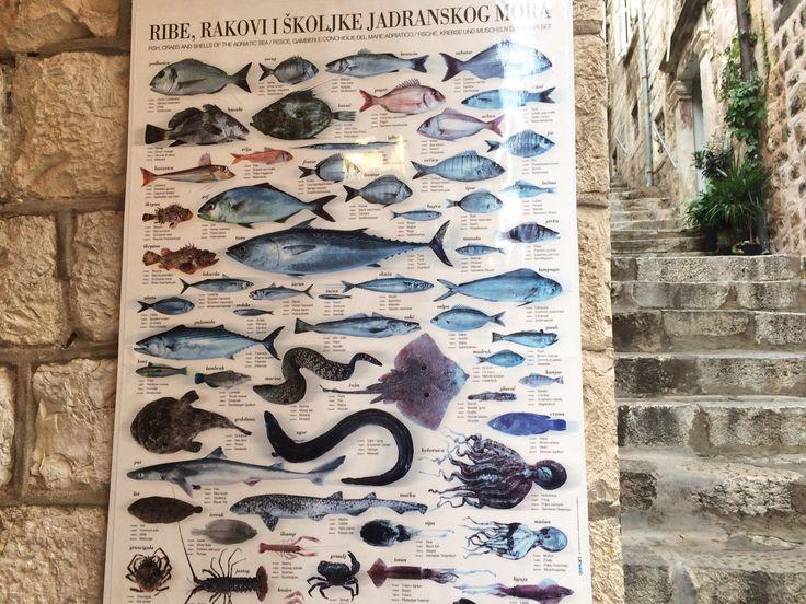 Our journey around Dubrovnik, Croatia #sea #seaview #harbour #island #islandhopping #indigolodges #villarenatl #luxuryvilla #holidays