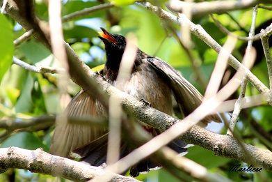 """""""Life in my backyard"""" - Colombo, Sri Lanka"""