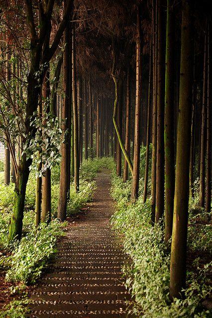 Forest Path, Chengdu, China