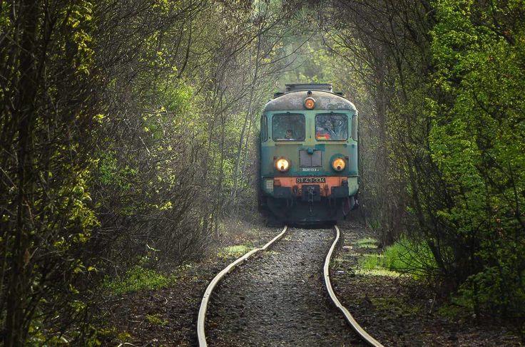 18 kwietnia 2016 - Wrocław Klecina  Klasyczny Rumun z PKP Cargo prowadzi skład trzydziestu próżnych wagonów na załadunek do Sobótki Zachodniej. Maszyna w tempie spacerowym mozolnie przedziera się przez gąszcz zieleni, który jest zlokalizowany w okolicy dawnej stacji kolejowej Wrocław Klecina.  Lepsza jakość i rozdzielczość tutaj -> http://rail.phototrans.eu/14,115689,3.html