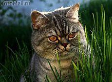 Sentado na grama gato irritado Naum | KotoMail.ru