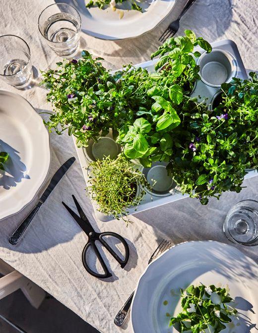 Uno stampo per dolci su un tavolo da pranzo usato come vaso per diverse piantine aromatiche - IKEA
