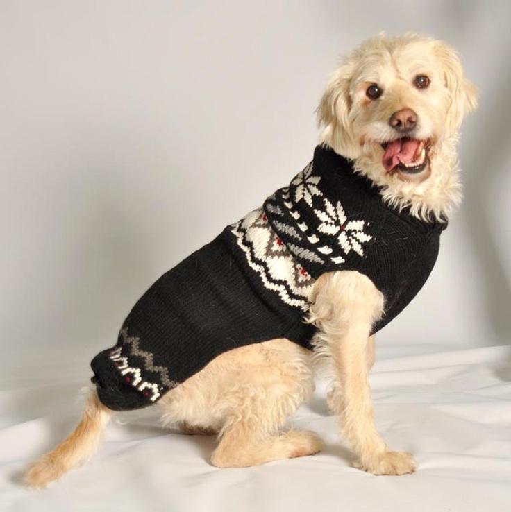 24 best Dogz in sweaterzz images on Pinterest | Doggies, Dog ...