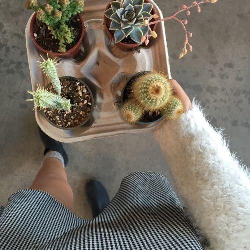 I'll take 4 plants to go please!