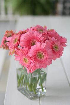 Perfectly pink gerbera daisies