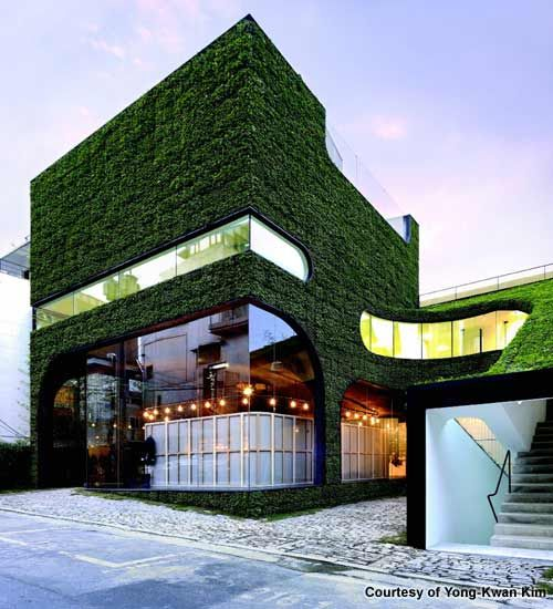 Project architects Minsuk Cho and Kisu Park dressed the Ann Demeulemeester shop's south-facing façade head to toe in a herbaceous, perennial known for its dense and glossy coverage. - Image - Design Build Network