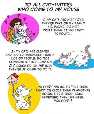 to all cat haters...