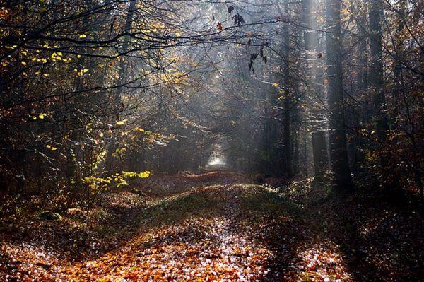Foresta Nazionale d'Armainvilliers - Tra specchi d'acqua e pittoresche colline, percorri i 50 chilometri quadrati della foresta di Armainvilliers, la meraviglia dell'Ile-de-France.