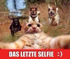 Besten lustige Bilder, Witze und Sprüche - nur auf derQuatsch.de. Hier werden täglich Witze und Bilder gepostet!