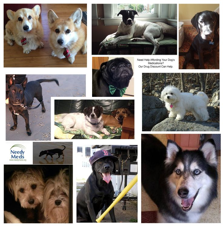 Today is NationalDogDay and we at NeedyMeds love our