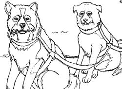Alaska Coloring Page Sled Dogs Coloring Page Coloring