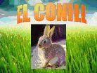 LA CLASSE DE P5: EL CONILL