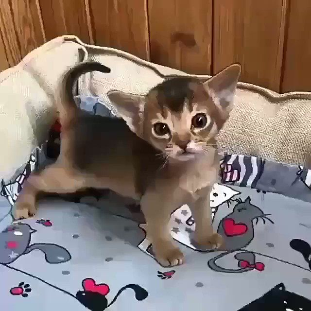 Emergency Kittens On Twitter Well Hey There Little Buddy