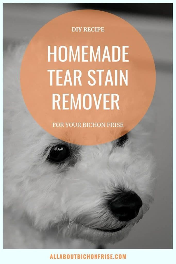 How To Get Rid Of Tear Stains On Bichon Frise